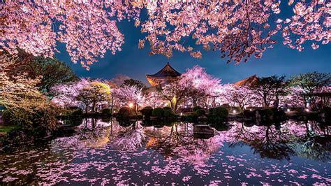 hd wallpaper mount fuji japan flowers mountain spring