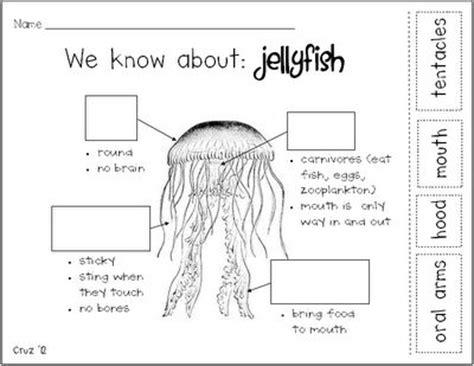 images  jellyfish  pinterest activities
