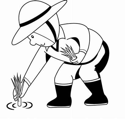 Planting Farmer Rice Coloring Clipart Colouring Plant