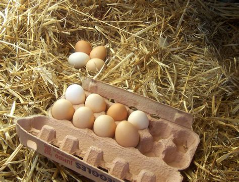 cuisiner une oie file freerange eggs jpg wikimedia commons