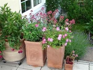 Rosen Im Topf Pflege : welche rosen eignen sich zur k belhaltung auf der terrasse ~ Lizthompson.info Haus und Dekorationen