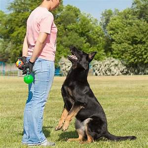 dog training diploma course centre of excellence With dog training courses