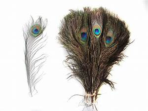 50 Peacock Feathers 10-12inch - Peacock Feathers ...