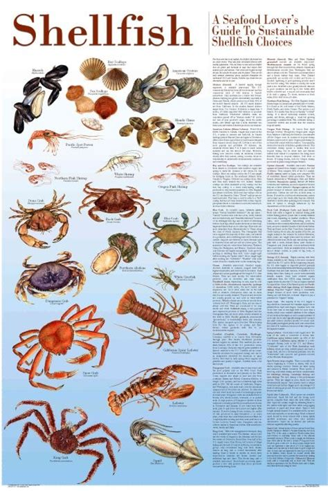 shellfish  seafood lovers guide  sustainable