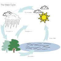 biology diagram examples