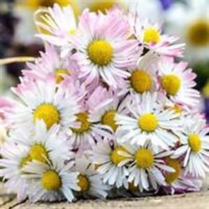 Welche Blumen Kann Man Essen : rezepte f r kinder sommerliche rezepte essbare blumen ~ Watch28wear.com Haus und Dekorationen