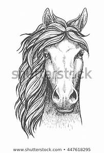 Horse Head Stock Images, Royalty-Free Images & Vectors ...