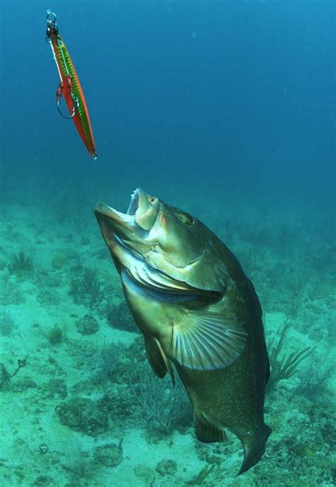 grouper jig fishing chases arnold jason fish underwater worms spear carp salmon sea deep florida floyfishingtips fleyfishingtips josh