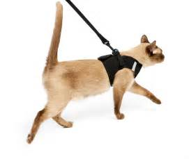 cat harness so i tried to take my cat on a walk yesterday he wasn t