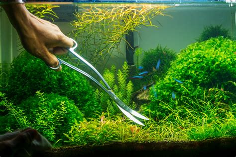 How To Make Aquascape by How To Create An Aquascape With A Waterfall Ijugaad
