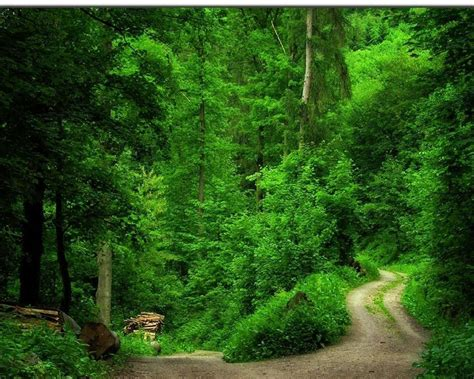 Green Forest Image by Its Cool Forest Roads All About Photo