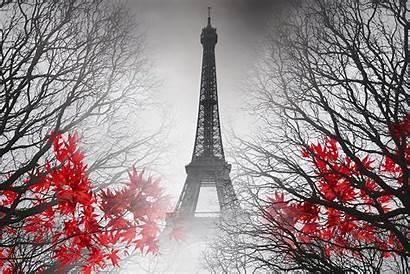 Eiffel Tower Desktop Flowers