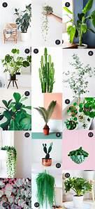 Bouture Plante Verte : mes plantes vertes pr f r es plantations plantas interiores plantas de interior et plantas ~ Melissatoandfro.com Idées de Décoration