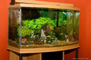 large freshwater fish tank 703906 tangsphoto stock