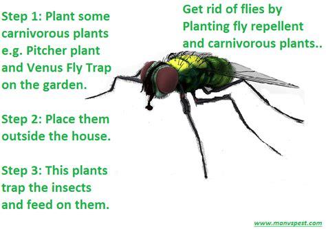 How To Get Rid Of Black Flies In Garden