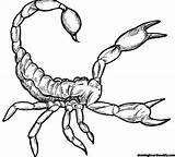 Scorpion Coloring Cool Drawing Title June sketch template