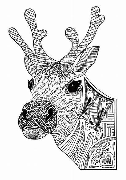 Coloring Christmas Adult Reindeer Pages
