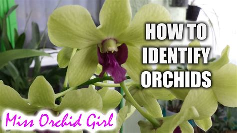 how to tell a from a flower how to identify orchids youtube