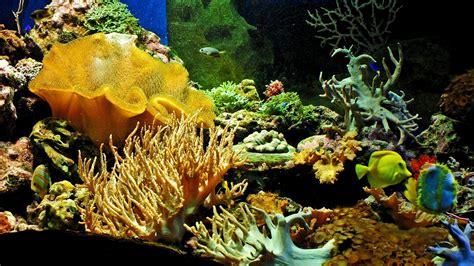telecharger papier peint bureau gratuit 1920x1080 fond d 233 cran aquarium 1920x1080 gratuit fond d 233 cran de 767370