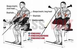 Long Head Biceps Exercise