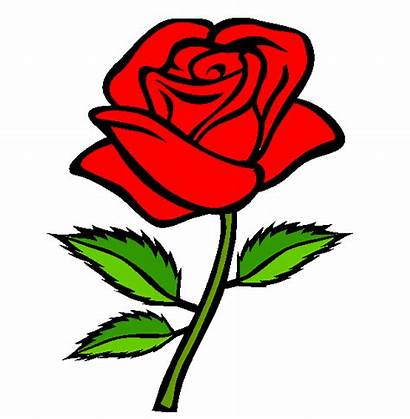 Rose Roses Drawing Clipart Cliparts Coloring Clip