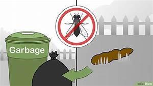 Se Débarrasser Des Mouches Naturellement : se d barrasser mouches naturellement paul colombo ~ Melissatoandfro.com Idées de Décoration