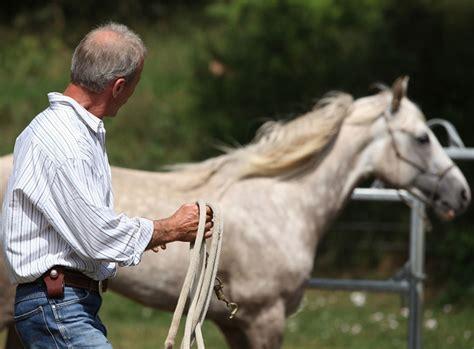 bodenarbeit mit dem pferd  geht es richtig zooroyal
