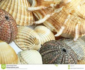 Sea Shells Background Royalty Free Stock Photography ...