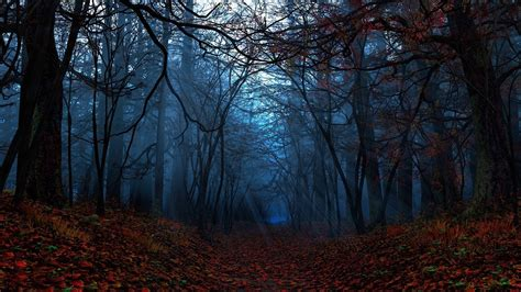 Fall Backgrounds Spooky spooky forest wallpaper 68 images