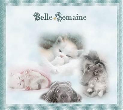 Semaine Bonne Gifs Belle Bonjour Ma Chat