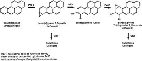 case control study  microsomal epoxide hydrolase