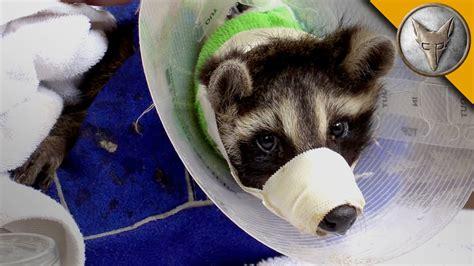 animal rescue with the ohio wildlife center youtube