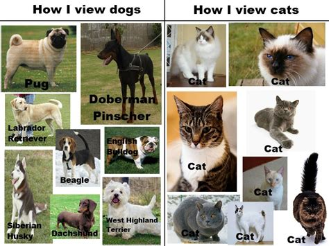 dogs vs cats the real view on dogs and cats breed and top pics