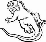 Lizard Coloring Iguana Pages Drawing Reptiles Print Alpha Male Easy Drawings Colouring Printable Colornimbus Sheets Neck Cute Getdrawings Frilled Sketch sketch template