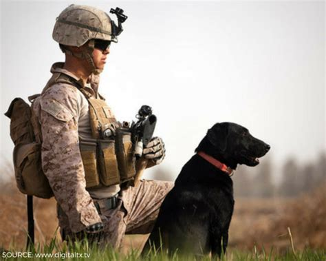 highly rated military  veterans organizations charity
