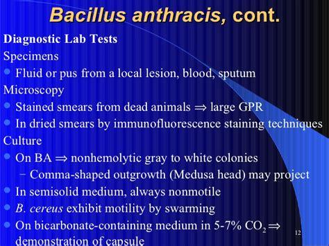 aerobic spore forming bacilli