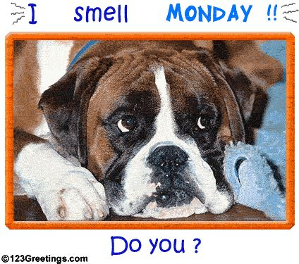 smell monday   pictures   images
