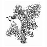 Pine Cone Coloring Drawing Outline Cardinal Branch Bird Cones Adults Stamp Patterns Bough Branches Stamps Heartfelt Creations Embroidery Dessin Getdrawings sketch template