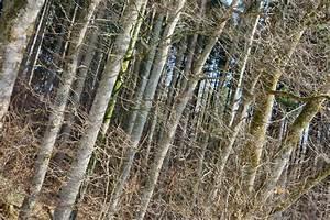Kubikmeter Berechnen Holz : gewittersturm fordert zwei millionen kubikmeter holz samerberger nachrichten ~ Yasmunasinghe.com Haus und Dekorationen