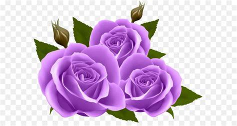 fiore clipart fiore sfondo rosa viola png clip immagine