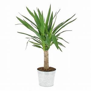 Plante D Intérieur Pas Cher : livraison yucca plante verte foliflora ~ Premium-room.com Idées de Décoration