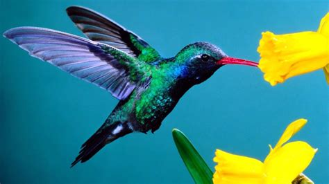 humming bird go travel easy