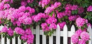 Aktuelle Blumen Im April : gem se blumen und stauden pflanzen im april tipps f rs fr hjahr ~ Markanthonyermac.com Haus und Dekorationen