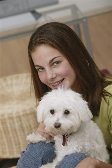 What Dogs Do Not Shed Hair by Family Dogs That Do Not Shed Hair Care Daily