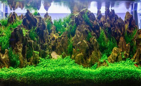 badezimmer ausstattung aquarium dekoration schöne ideen tipps tricks