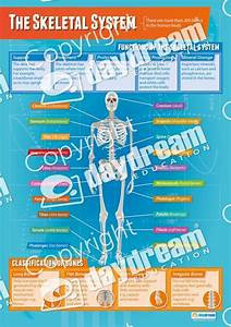 Set Of 9 Applied Anatomy  U0026 Physiology Posters  U2013 Physical
