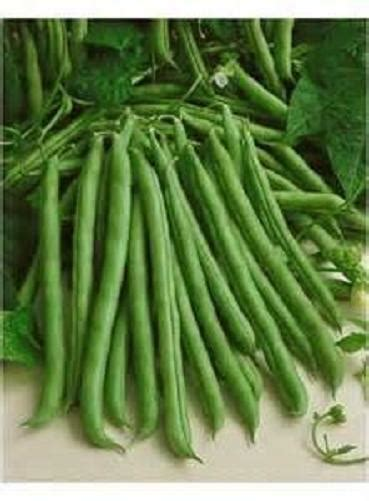 seeds stringless blue lake   pole green beans