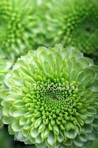 1000 images about Floral Green Flowers on Pinterest