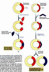 Which Method Of Genetic Recombination Is Illustrated In