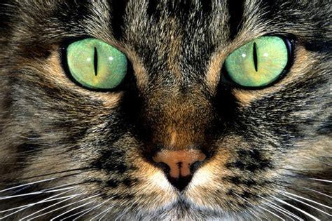 hd wild images desktop images animals pets animal eyes